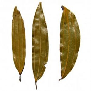 Bay Leaf as healing herbs and spices