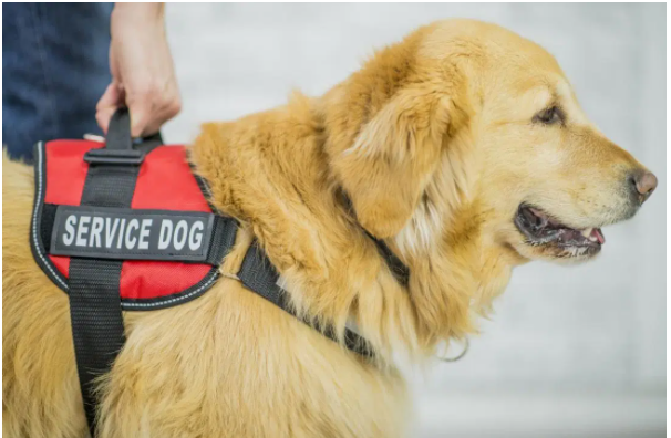 Service dogs for depression and anxiety